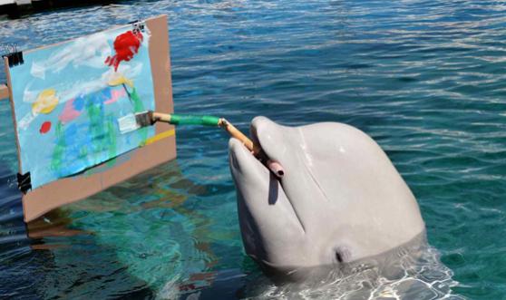 tudo sobre as baleias