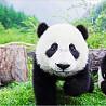 5 curiosidades sobre o urso panda
